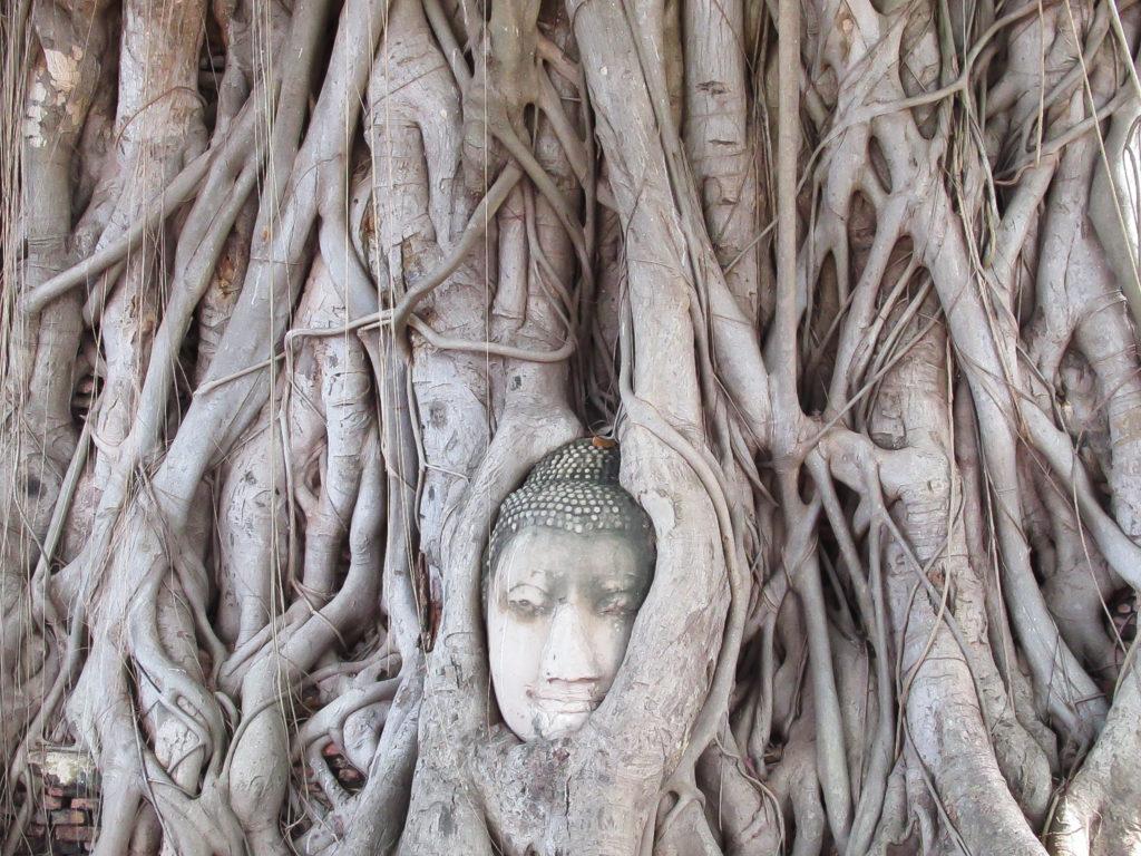 菩提樹の根に覆われた仏頭